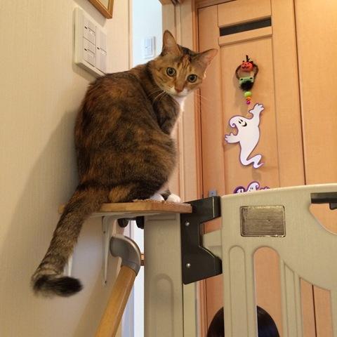 ベビーゲート+猫=お手製キャットウォーク