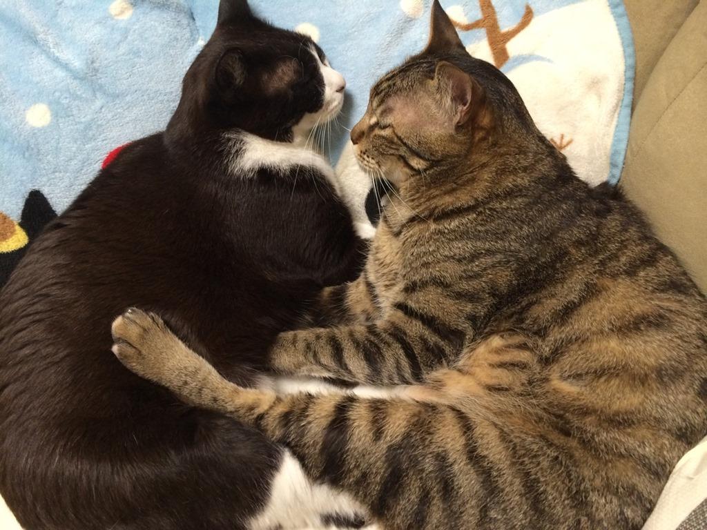 【お行儀が・・・】うちの猫の食事スタイル